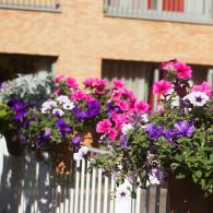 planten op balkon Insula Dei